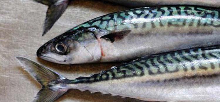 Kernow Sashimi