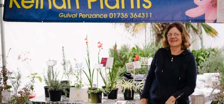 Chelsea Gold For Kelnan Plants