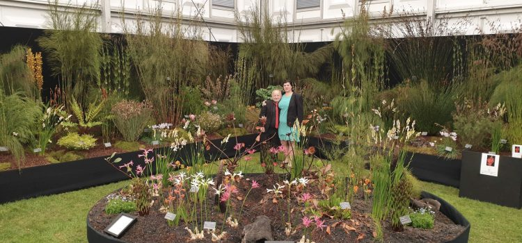 Kelnan Plants win Gold and Best in Show at Chelsea Flower Show!