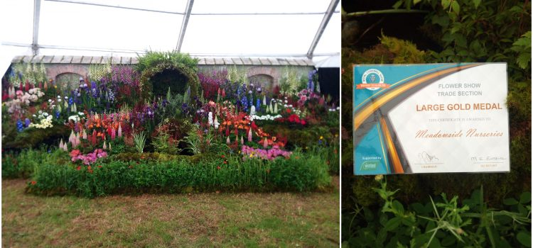 Meadowside Nursery win Large Gold Award at Royal Cornwall Show!